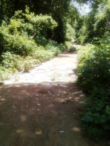 trail1