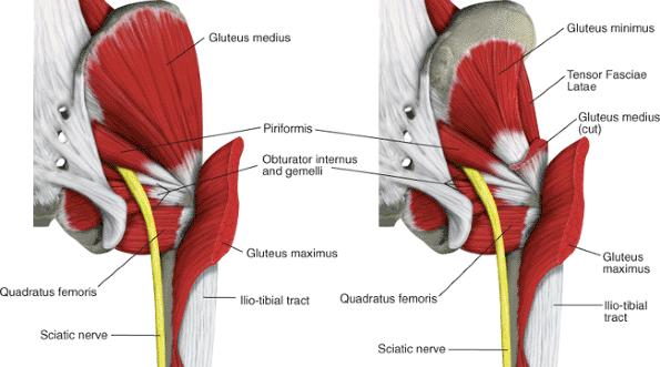 glutues-medius-minimus-and-piriformis